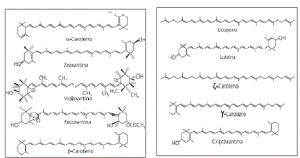 carotenoides_1